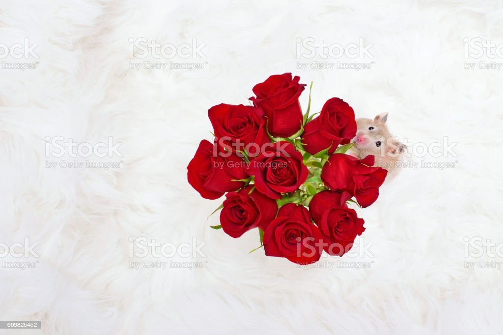Stop and Smell Roses Concept stock photo