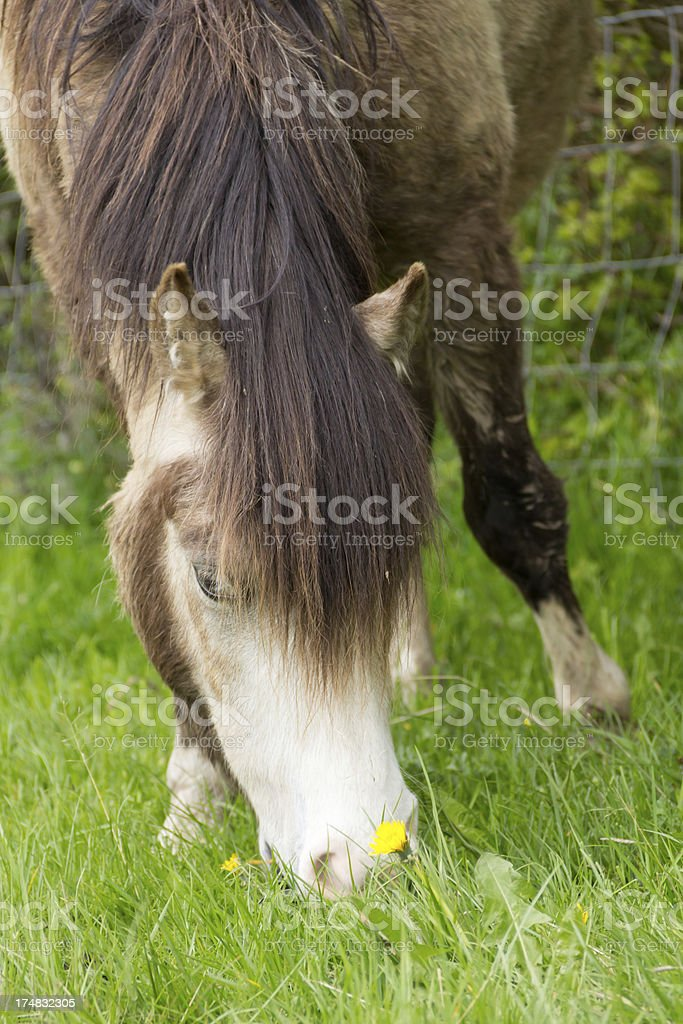 Stop and smell the flowers royalty-free stock photo