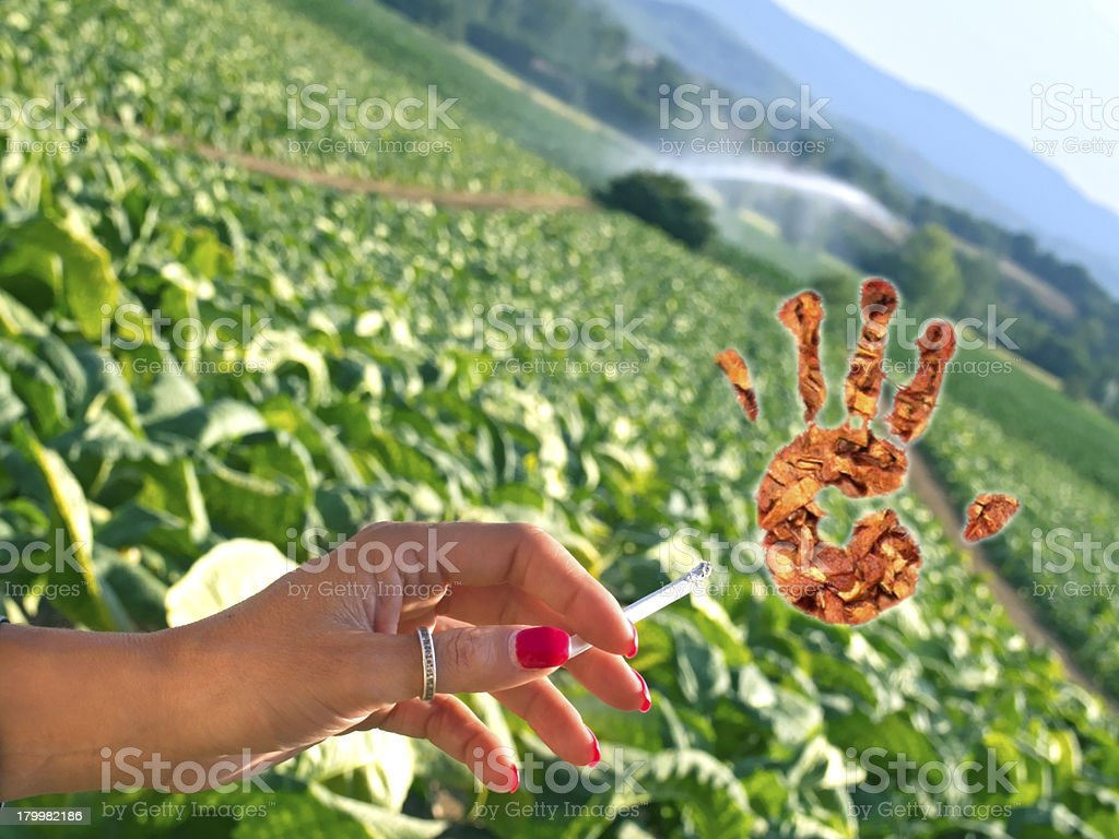 stop smoking cigarette and tobacco growing royalty-free stock photo