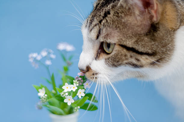 Stopping to smell the forget-me-nots stock photo