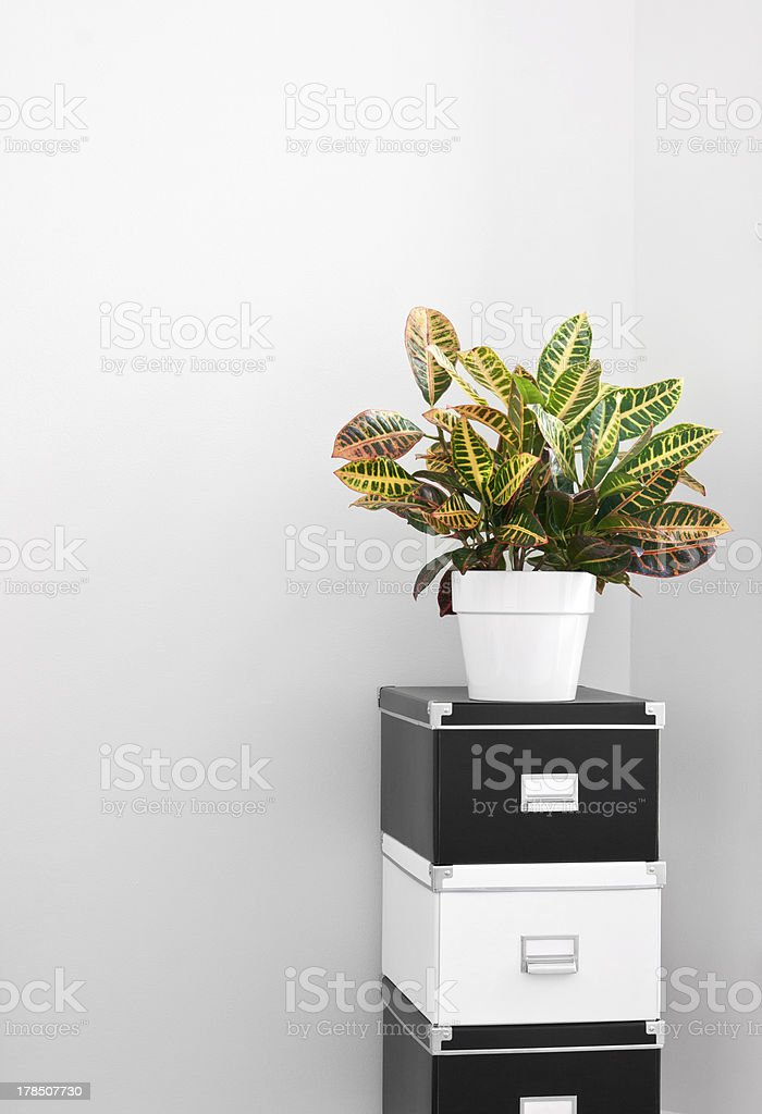 Storage boxes and green plant in a room corner stock photo