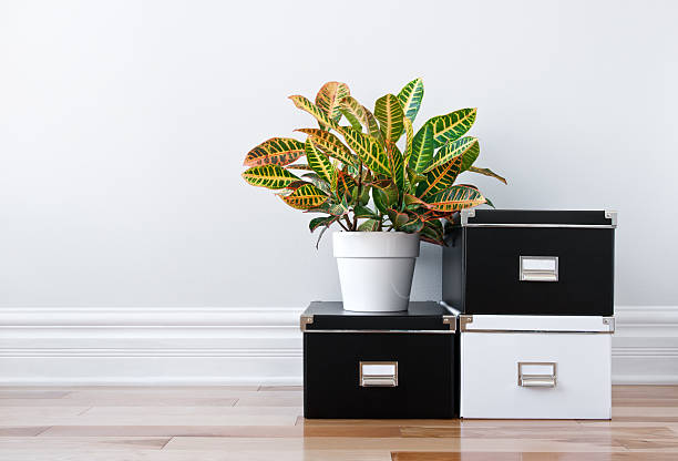 Storage boxes and green plant in a room stock photo