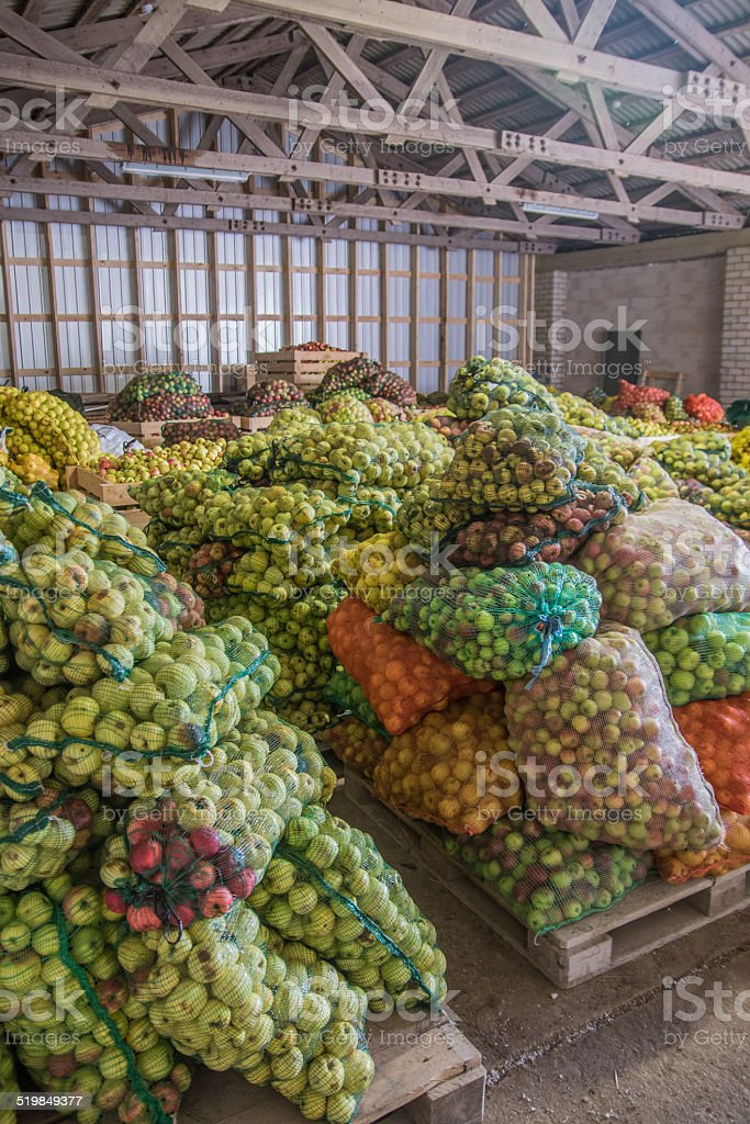 Storage full of apples in bags stock photo