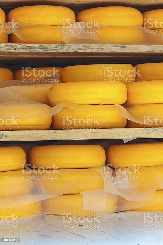 Storage of ripening Dutch yellow cheese royalty-free stock photo