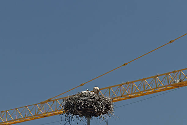 Storch Im Nest – Foto