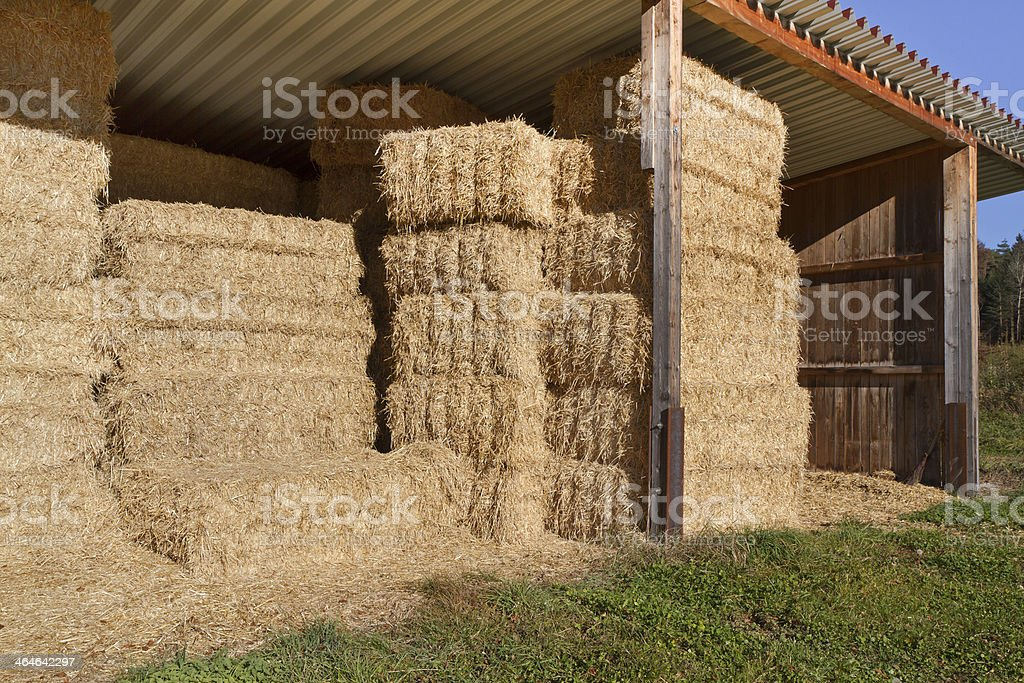 Storing hay balls in autumn stock photo