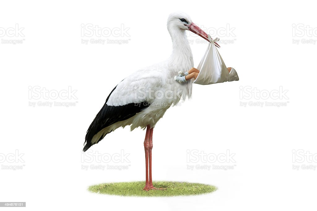 Stork and Baby stock photo
