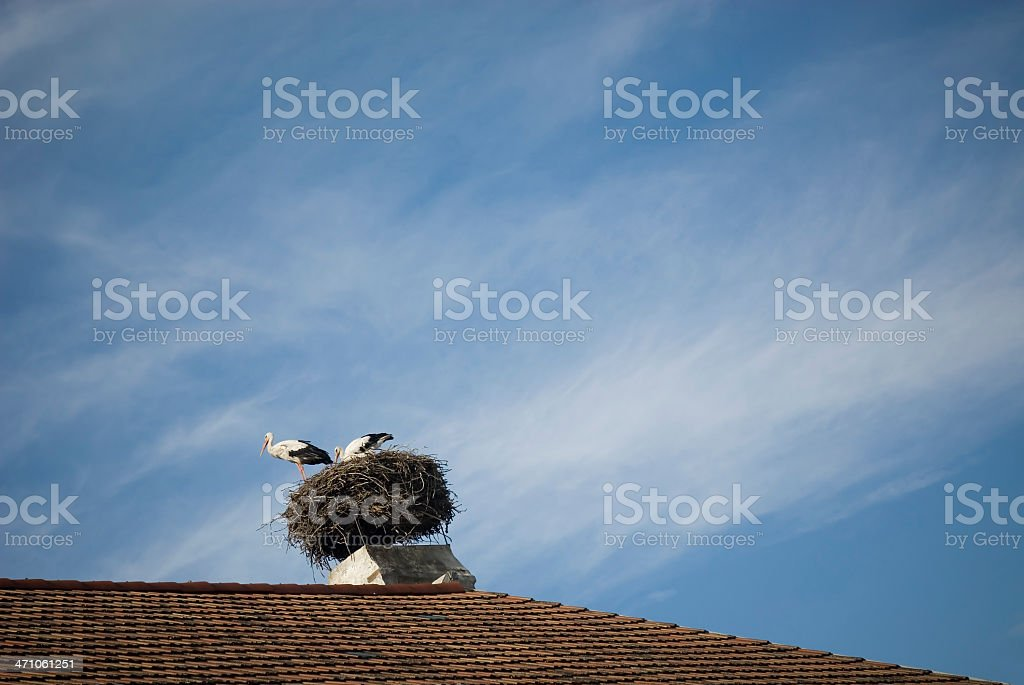 Stork Couple at Home royalty-free stock photo