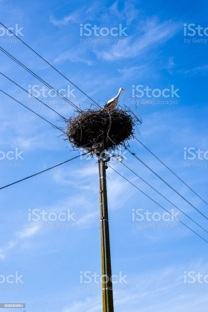 Stork guarding the nest stock photo