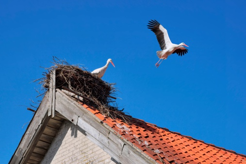Stork in a nest on the roof of farm building