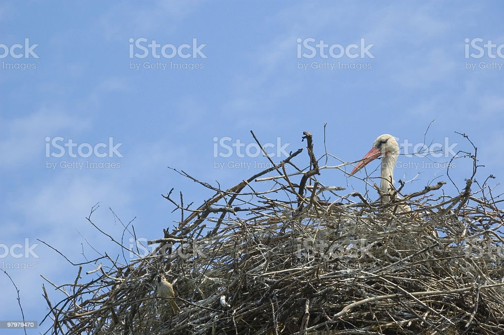 stork in a nest royalty-free stock photo