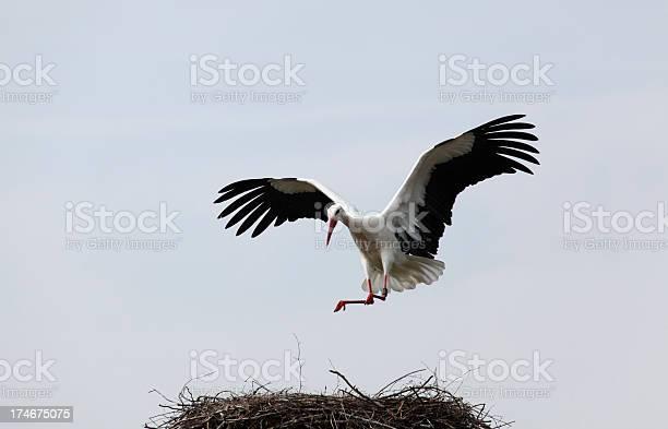 Stork landing picture id174675075?b=1&k=6&m=174675075&s=612x612&h=gyge57 dg5brmkia fw0ztkcuhcrelzbfku0cwkrlo4=