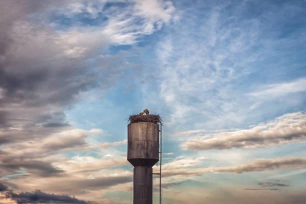 storchennest. ein storchenpaar. sommernachmittag - dokumentation stock-fotos und bilder