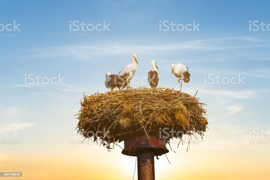 stork nest on a high post on a sunset background royalty-free stock photo