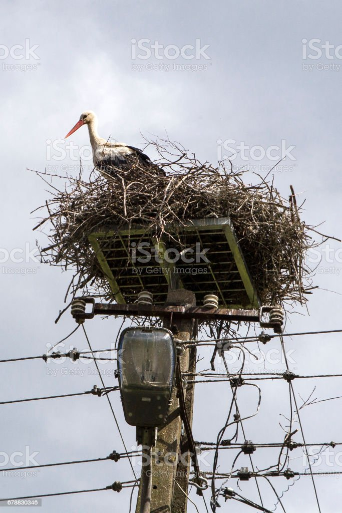 Stork nest on an electric pole royalty-free stock photo