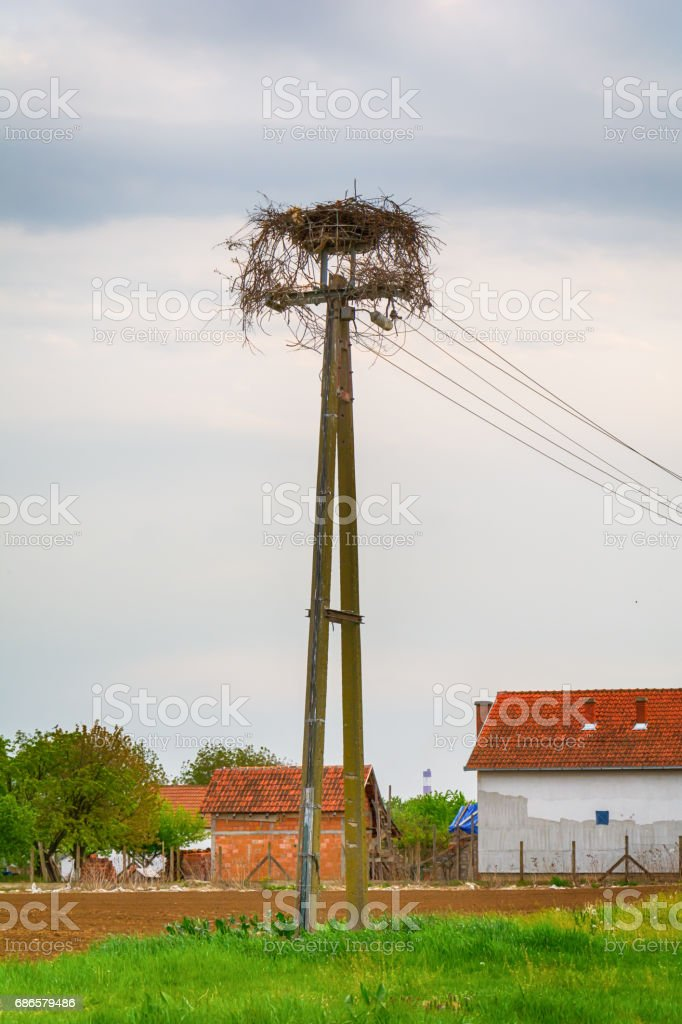 Stork nest on the electric pole royalty-free stock photo