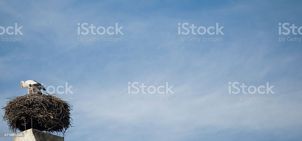 Stork Nest Panorama stock photo