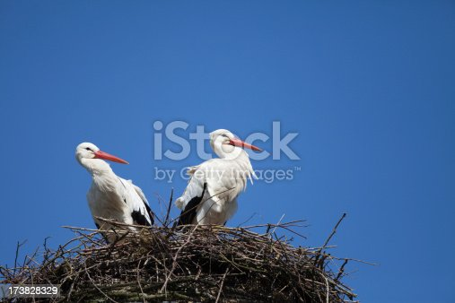 two storks in their nest on a windy day (XXXL)