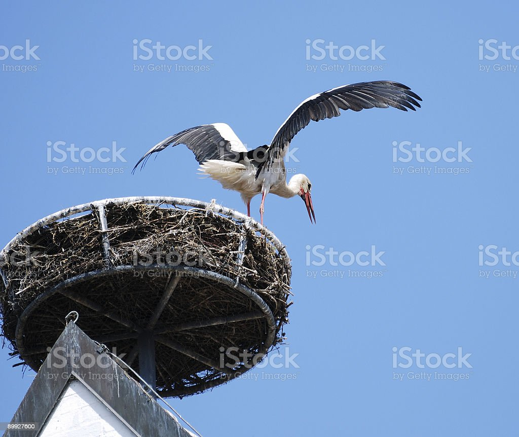 Stork nest stock photo