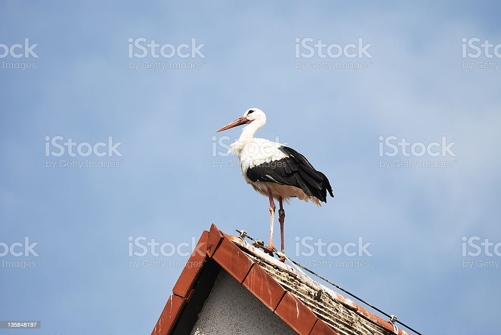 Stork on the roof royalty-free stock photo