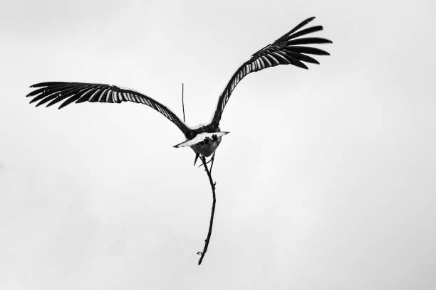 Storch – Foto