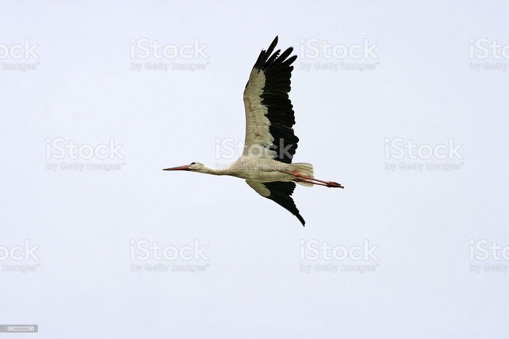 Stork royalty-free stock photo