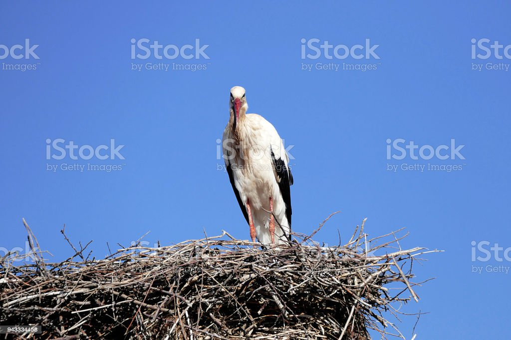 stork returning to their nests in the spring months, the stork\'s nest,