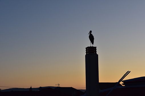 A stork standing on an roof's chimney in the sunset