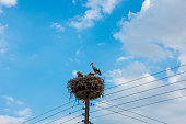 Storks are standing in the nest, Greece