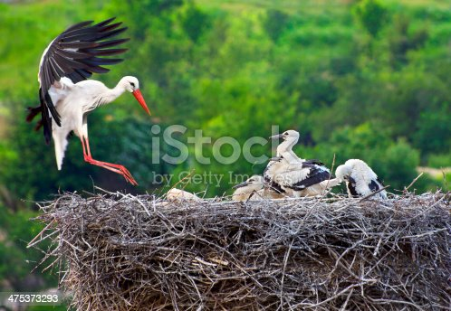 istock Stork with Young on Nest 475373293