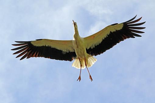 Stork's At Home