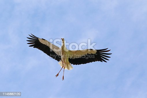 A stork stays in its nest expecting baby storks at any time.