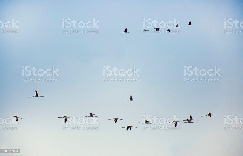 storks going stock photo