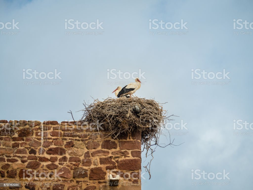 Storks in the city of Silves, Portugal stock photo