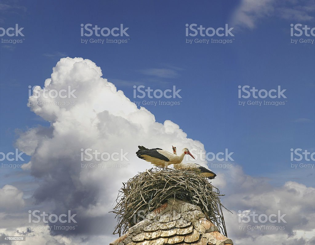 Storks in the nest royalty-free stock photo