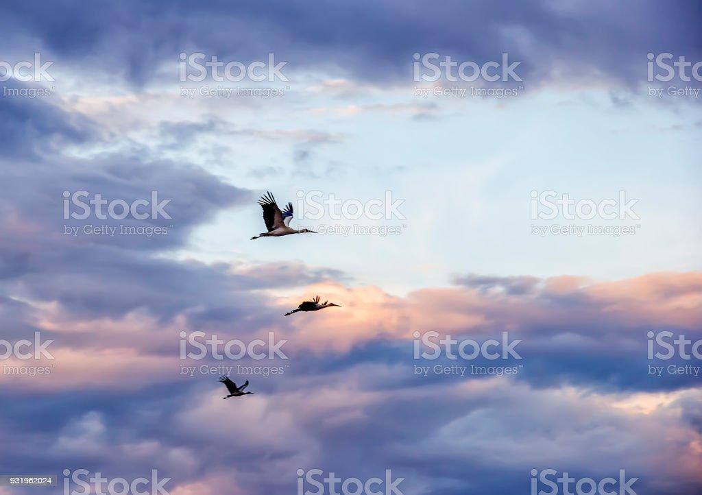 storks in the sky stock photo