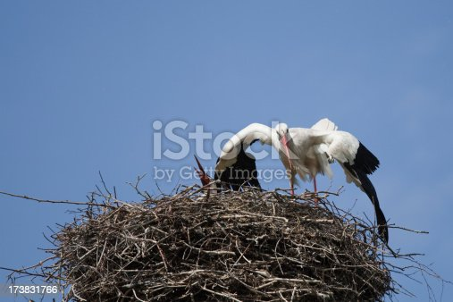 Pair of storks mating on their nest (XL)
