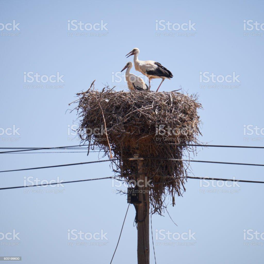 Störche am Nest an Elektrizität Mast – Foto