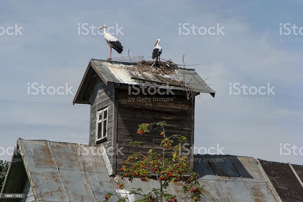 Storks on the roof royalty-free stock photo