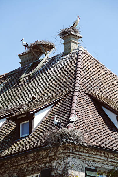 storks on the roof - tamara dragovic stock photos and pictures