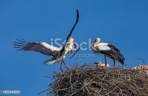 istock Storks 1322444231