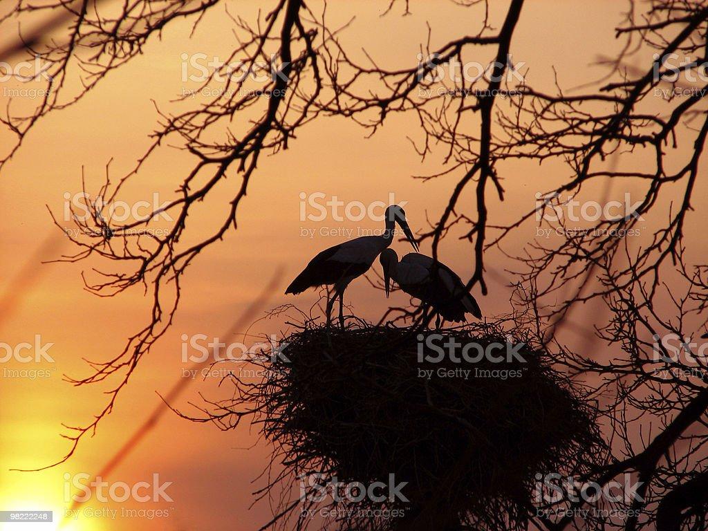 Storks foto stock royalty-free