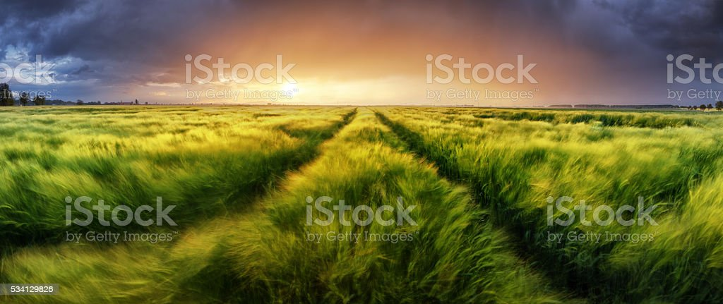 Storm and light on meadow, Panorama landscape stock photo