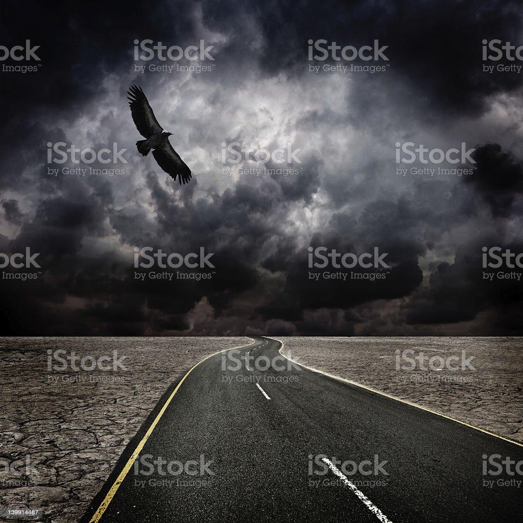 Storm, bird, road in desert stock photo