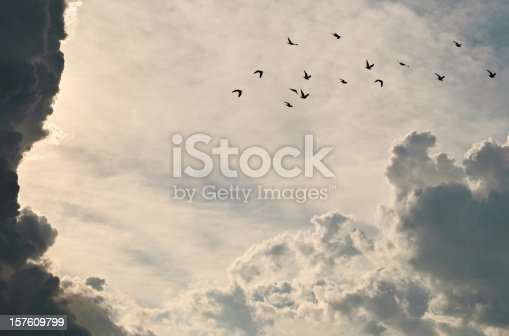 Group of pigeons through storm clouds at sunset.