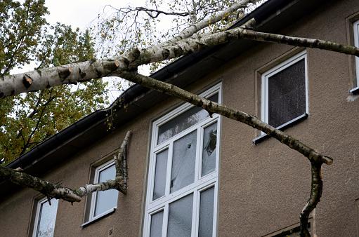 Storm damage after hurricane Herwart in Berlin, Germany