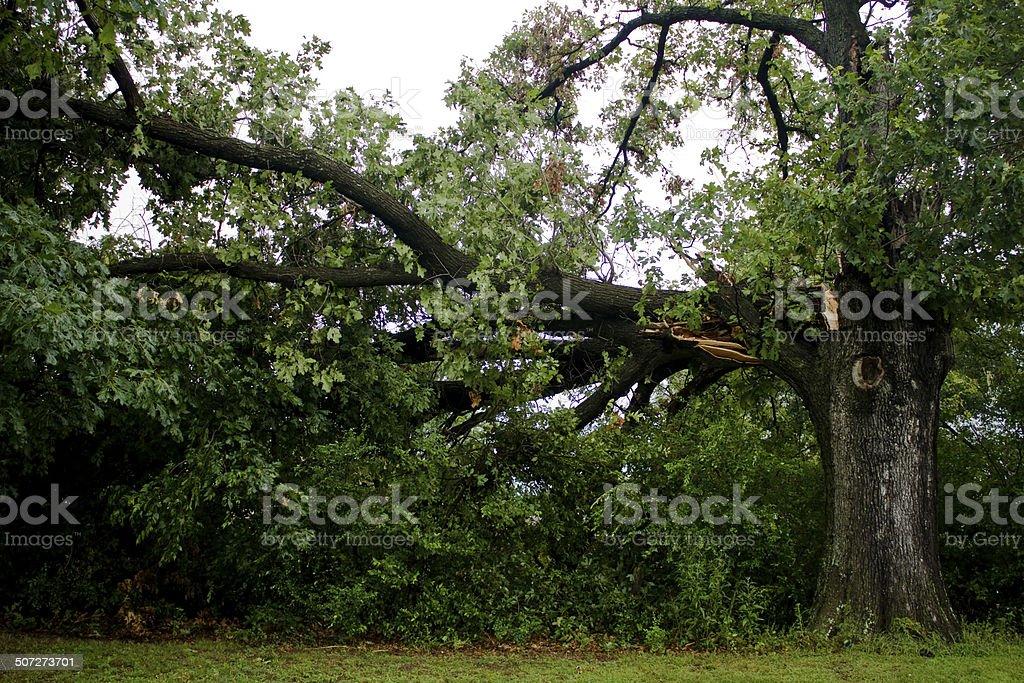 Storm Damage Fallen Branch stock photo