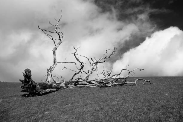 Sturmschaden gefallener Baum. – Foto