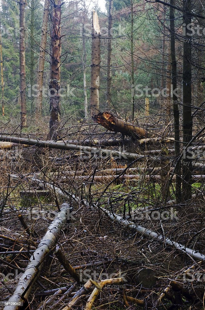 Storm damage in a forest. royalty-free stock photo