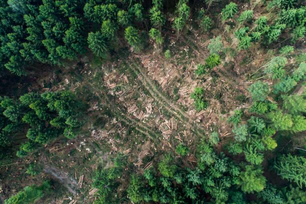 daño de la tormenta en el bosque - trabajos de limpieza - deforestacion fotografías e imágenes de stock